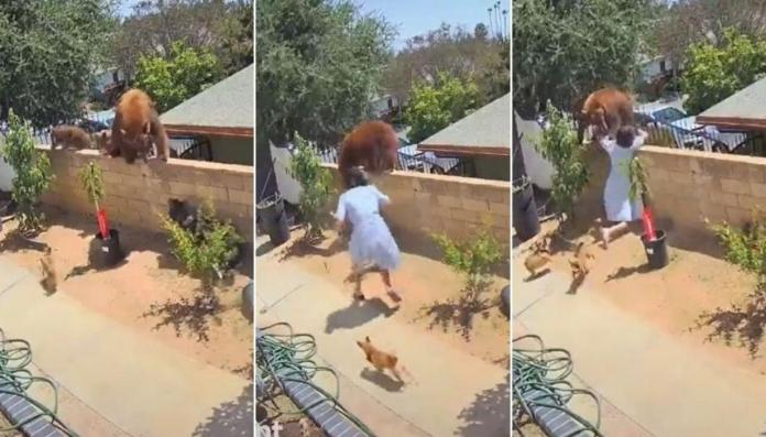Shocking as 17-yr-old girl fights off a bear with bare hands to save her dogs [Video]